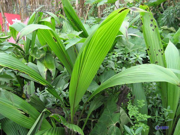 子房植物结构示意图